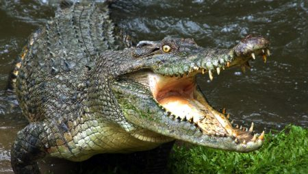 Battle of the Crocs: What can we learn from a recent IP dispute?
